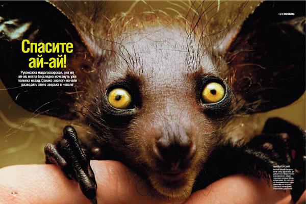 Самые страшные животные и описание